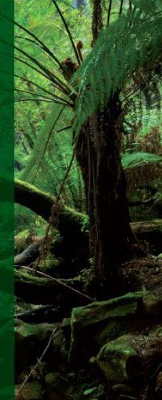 Ur - Wald