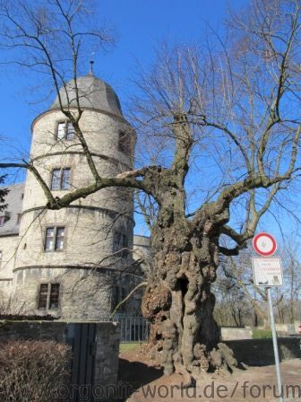 wewelsburg baum