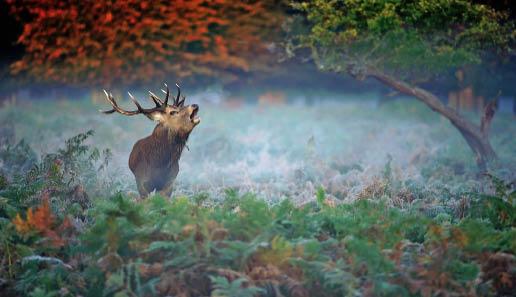 74_Zeit_fuer_eine_Natur_ohne_Jagd