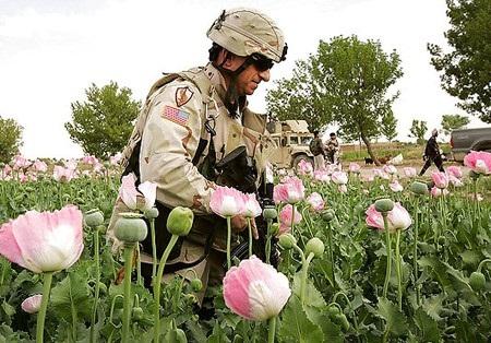 afghanistahn mohn