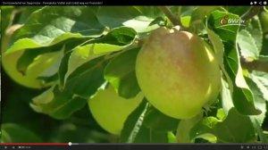 äpfel2