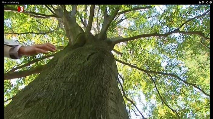 energie von bäumen 1