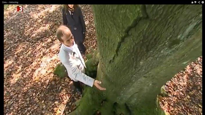 energie von bäumen 2