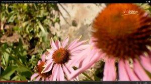 krameterhof echinacea