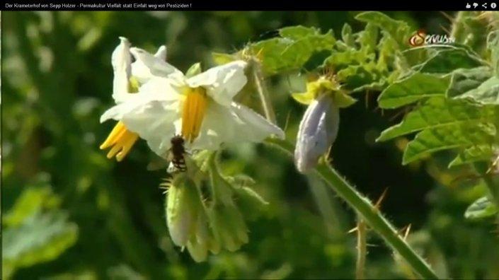 pflanze, insekt