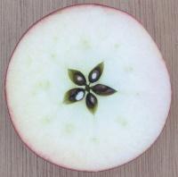 200px-Apfel_aufgeschnitten