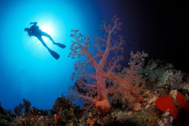 Komm Wir Häkeln Uns Ein Korallenriff H0rusfalke