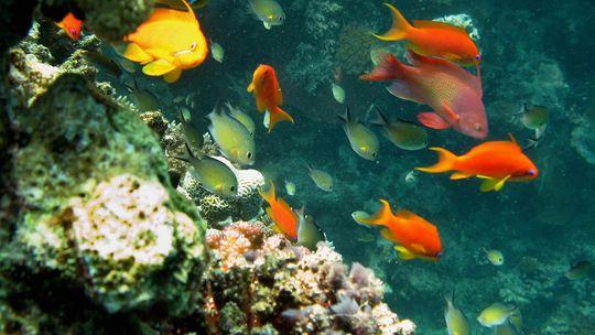 korallen-fische-rotes-meer-540x304